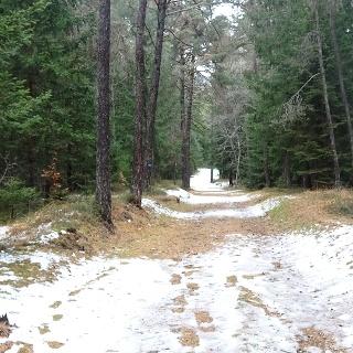 Schöner breiter Wanderweg durch den Wald