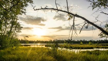 Das Naturhighlight der Tour, das Hochmoor Wildsee