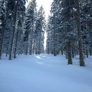 Lichter Wald über 1500m Seehöhe
