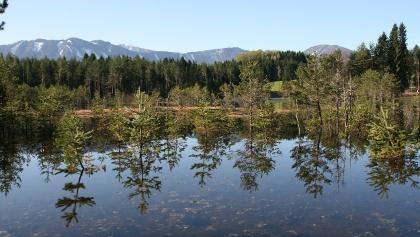 Höflein-Moor im Europaschutzgebiet, mit Blick nach Süden