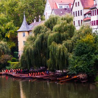 Stocherkähne am Neckarufer in Tübingen