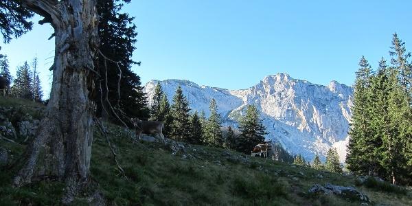 Feichtaualm mit Sengsengebirge