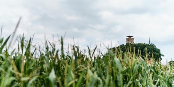 Beim Weiler Hohenrain folgt der Napoléonturm.