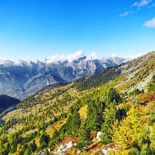 Forest with view on the valais