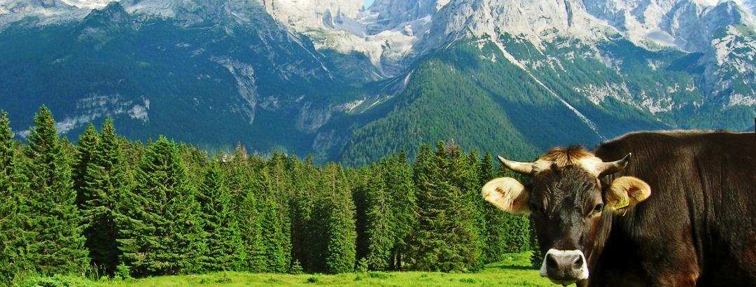 Pascolo Ritort e Dolomiti di Brenta