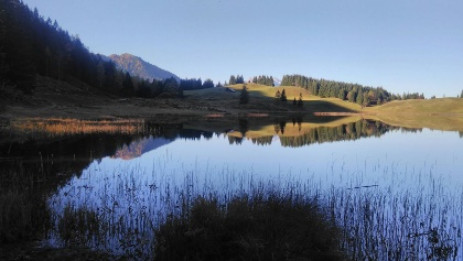 Morgenstimmung am Seewaldsee