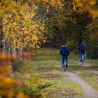 Fahrradfahren in Småland