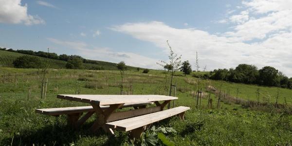 Tisch des Weins am Jubiläumswald