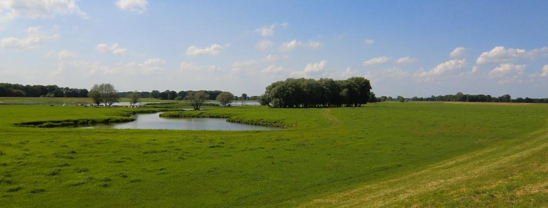 Im Biosphärenreservat Flusslandschaft Elbe