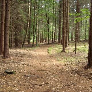 Die Strecke verläuft sehr schön durch den Wald.