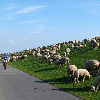 Fahrradtour am Deich