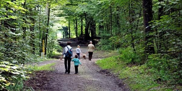 Familienfreundlich, schattig: Wege am Tiergarten