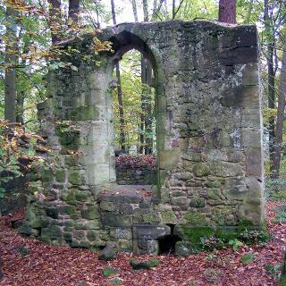 die hohen Bäume stehen mitten in den Ruinenwänden von Töpfersdorf
