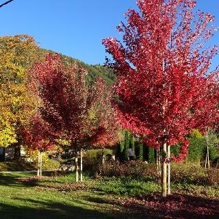 Herbststimmung am Maso Plaz