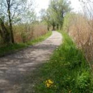 Radweg beim Simssee