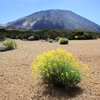 Die Wanderung führt durch den schönsten Teil der Cañadas.