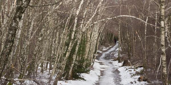 The first couple of steps: just a few meters off Írott-kő peak