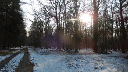 Beverner Wald