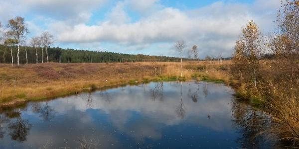 Das Hochmoor Mecklenbruch im Forstamt Neuhaus