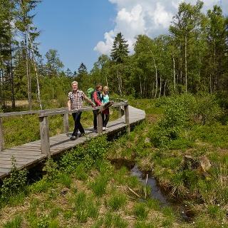 Durch das Hochmoor Mecklenbruch im Forstamt Neuhaus