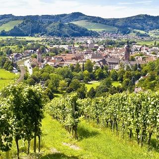 Ausblick auf Gengenbach