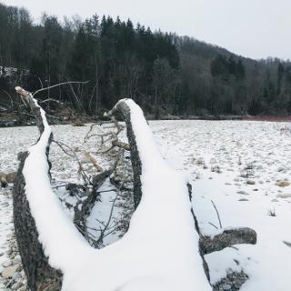 Viel angeschwemmtes Holz an der Isar (bis zum nächsten Hochwasser…)