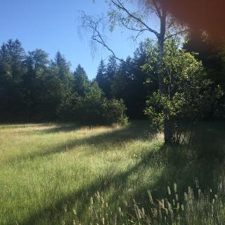Naturschutzgebiet Bodenmöser