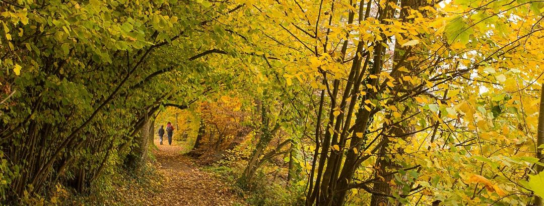 Wunderschön im Herbst: Der Uferweg am Hallwilersee