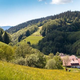 Wandern auf dem Premiumweg Wiesensteig in Bad Peterstal-Griesbach