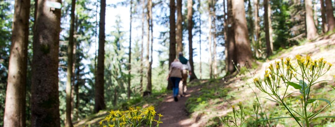 Wandern auf naturbelassenen Pfaden,  ein Hochgenuss!
