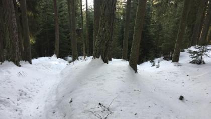 Aufstieg durch den Wald. Trotz sehr viel Schnee hier kaum feste Grundlage