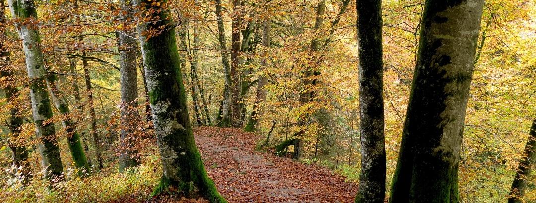 Die Wanderung ist im Herbst besonders schön.