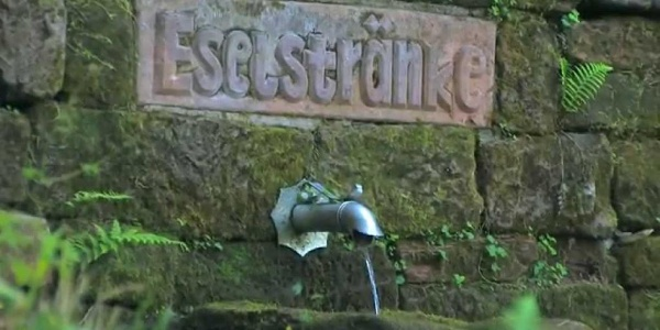 Pfälzer Weinsteig Etappe 8