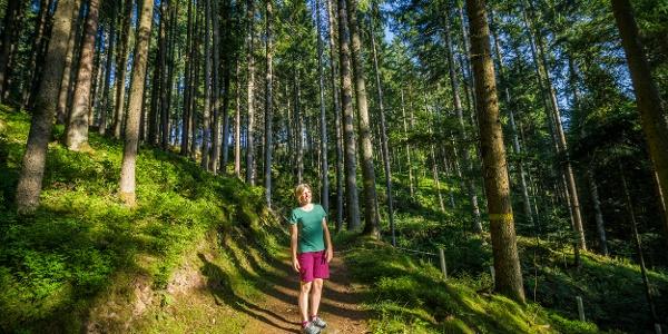 Die naturbelassenen Wege im Wald machen Wanderern Spaß!