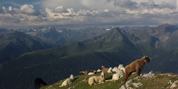 Blick Richtung Stubaier Alpen