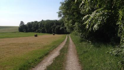 Waldrandweg oberhalb Adenstedt