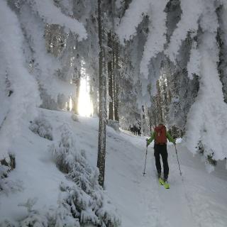 Aufstieg von Schwarzenau - Zauberwald im Nebel