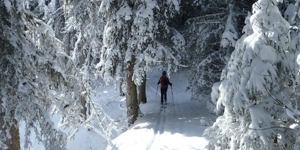 Aufstieg - Wanderweg 783
