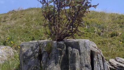 Bunker Polonyna Runa