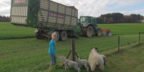 Osterwanderung zur Schafweide