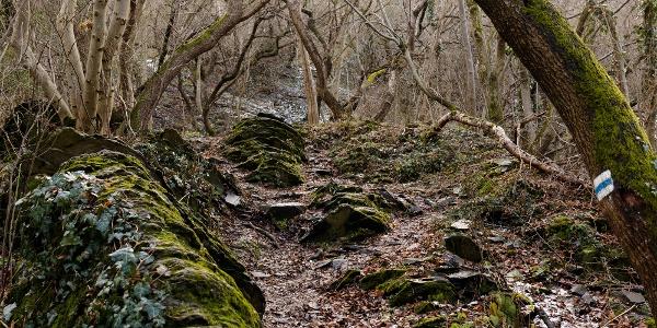 Séta az Országos Kéken a Szent György-hegy bazaltorgonái alatt