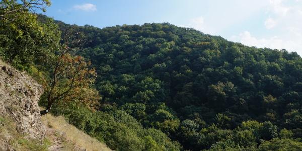 Az ösvény a szembenső hegyoldal fái alatt kanyarog