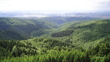 Waldgrafen-Runde