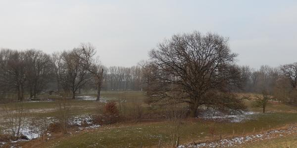 Siegauen bei Meindorf