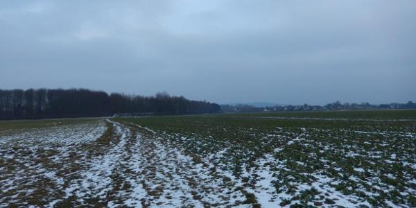 Felder zwischen Vilich-Müldorf und Hangelar