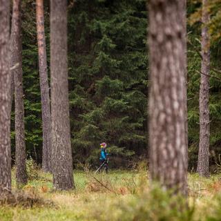 Durch die Wälder rund um Trochtelfingen.