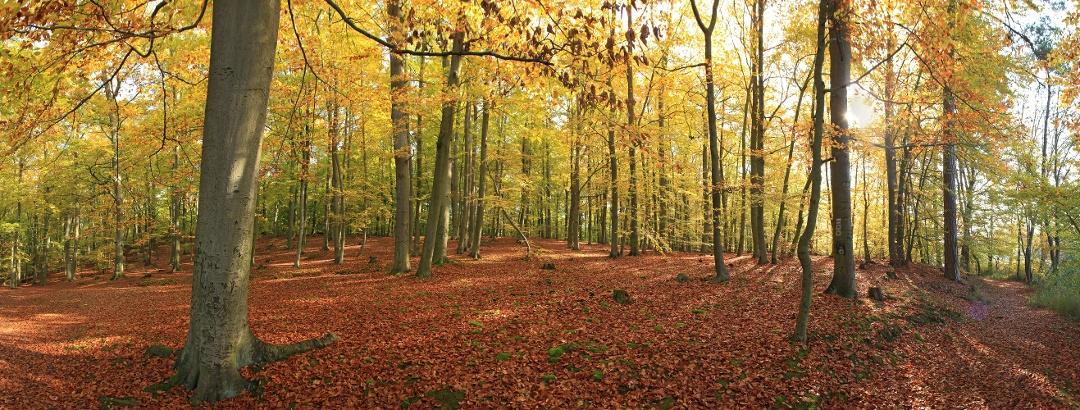 Buchenwälder am Hellsee