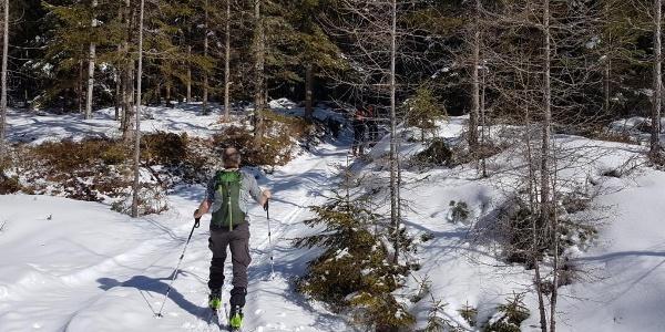 Waldweg aufwärts