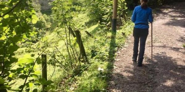 Wanderung zur Burgruine Falkenstein