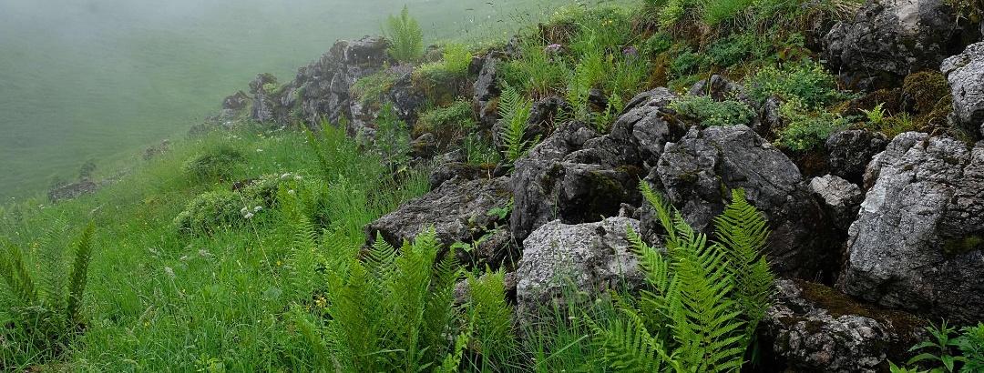 Vordere Rindersgundalpe (verfallen)